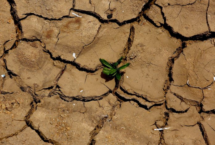 epa04768914 A plant pushes up through dry land in Gauribidanur village, Karnataka state, India, 26 May 2015. The death toll from the severe heat wave sweeping southern India passed 750, officials said, predicting a relief from soaring temperatures over the next few days.  EPA/JAGADEESH NV